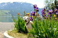 My dog Bailey. Tammy, Colton, OR - 8/13/2015