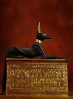 A statue of the jackal god Anubis from the tomb of the pharaoh Tutankhamun. Source Egypt Museum