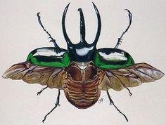 scientific flying rhino beatle drawings - Google Search