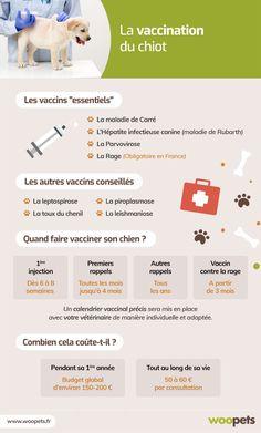 La vaccination du chien et du chiot : quel calendrier respecter ? Shih Poo, Education Canine, Shiba Inu, Westies, Dressage, Chihuahua, Pugs, Corgi, Pug
