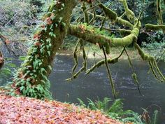 Oregon Like No Other Myrtlewood Allegany Oregon River