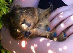 He looks like my old guinea pig :(