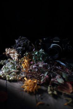 fadingbeauty,deadflowers, fade away, still life, valokuvaus,
