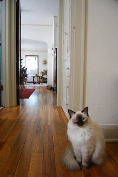 House Tour: An Eclectic, Minimal Minneapolis Apartment | Apartment Therapy