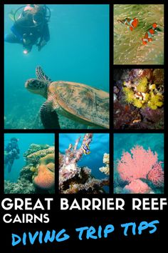 Planning a trip to dive the Great Barrier Reef? I've been there twice for a weekend. Read my tips to organise your stay and select the best cruise and reefs!