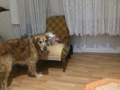 Ankara köpek oteli