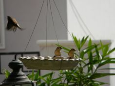 DIY bird feeder from a plate.  This is perfect for feeding stations.
