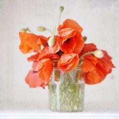 Reminds me of my grandmother's poppy garden......ahhh beautiful memories