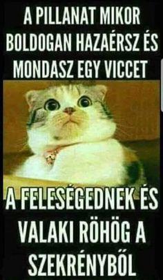 Fotó Really Funny, Funny Cute, Animal Memes, Funny Animals, Funny Images, Funny Pictures, Funny Jokes, Hilarious, Percy Jackson Memes