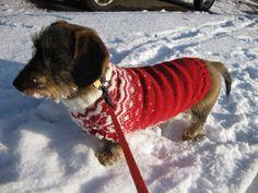 Wibi in de sneeuw, met haar noorse trui aan (door mij gebreid!)