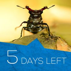 Just 5 days to go! #DefendNature #stagbeetles