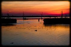 Venice Louisiana Bayous