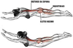 The superman exercise is an auxiliary movement that targets your spinal erectors, while your gluteus maximus and hamstrings act as synergists. Good Back Workouts, Back Exercises, At Home Workouts, Training Exercises, Butt Workouts, Superman Workout, Superman Superman, Asana, Weight Training