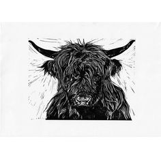 Cardboard Shipping Boxes, Animal Sketches, Linocut Prints, Pet Portraits, Cattle, Farm Animals, Printmaking, Poppy, Hand Carved