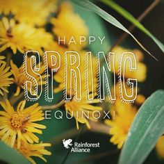 We are building a powerful alliance to create a better future for people and nature. First Day Of Spring, Happy Spring, Lost In The Woods, Green Tips, Energy Conservation, Picture Tag, All Pictures, Friends, Instagram