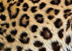 textuur dieren