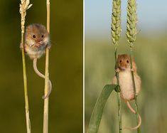 15 Attendrissants Portraits de Souris dans leur Environnement Naturel
