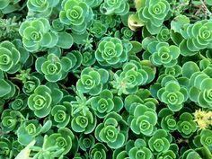 Succulents are a great choice for your garden they ask very little and give a whole lot to you. There are more than thousand species of succulents in this world, so choice is not a problem. As you will see below in this post that growing succulent is pretty easy.... Taking Care Of Succulents, How To Water Succulents, Growing Succulents, Growing Plants, Planting Succulents, How To Grow Cactus, Easy Plants To Grow, Jade Plants, Cactus Plants