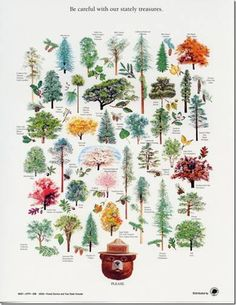 Old Smokey Bear poster w/ state trees