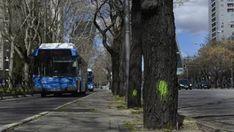 La tala de árboles comienza en la Castellana y durará hasta mayo