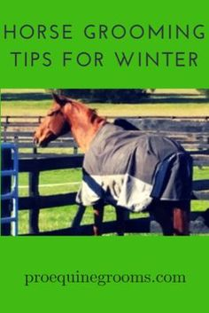Horse grooming in the winter - tips and tricks! Winter time can create mud and other horse grooming challenges - here are some tips and tricks for easy horse grooming in the winter.