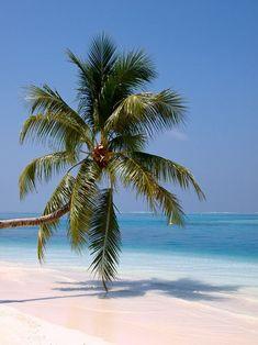 Rangali Island, Maldives by Per Lidvall