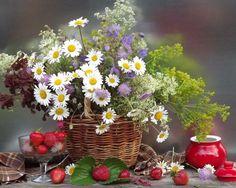 фотографии цветов -14