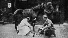 A vet treats the leg of an army horse during World War I
