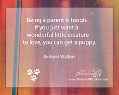 Being a parent is tough. If you just want a wonderfull little creature to love.... www.rockwellpetspro.com #Dog