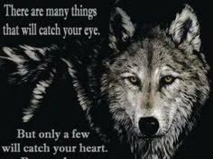 Image result for native wolf quote