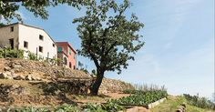 Il FAI – Fondo Ambiente Italiano è orgoglioso di aprire al pubblico Podere Case Lovara a Punta Mesco (Levanto), 45 ettari di terreno e tre fabbricati rurali