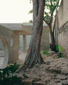 Image 26 of 39 from gallery of Merida House / Ludwig Godefroy Architecture. Photograph by Rory Gardiner Concrete Formwork, Concrete Staircase, Concrete Architecture, Concrete Steps, Concrete Design, Contemporary Architecture, Architecture Wallpaper, Merida Mexico, Mayan Cities