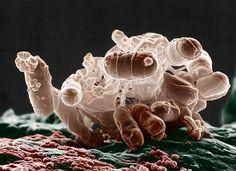 Исследователи смогли переписать значительную часть генома бактерий (5 фото) http://nlo-mir.ru/chudesa-nauki/47632-genoma-bakterij.html