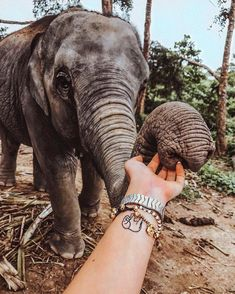 Find images and videos about girl, beautiful and travel on We Heart It - the app to get lost in what you love. Cute Creatures, Beautiful Creatures, Animals Beautiful, Cute Baby Animals, Animals And Pets, Safari, Elephant Love, Thailand Travel, Animal Kingdom