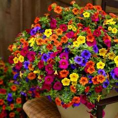 4 Single Swivel Hooks Polyanthus New Hanging Baskets Summer Spring Christmas