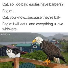 Do bald eagles have barbers?