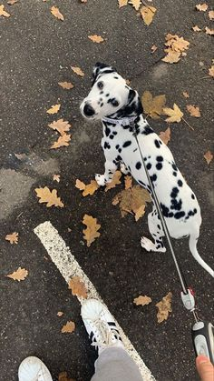 Cute Baby Animals, Animals And Pets, Cute Puppies, Cute Dogs, Cute Creatures, Mans Best Friend, Puppy Love, Fur Babies, Dog Cat