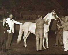 Ferzon Horseback Riding Lessons, Beautiful Arabian Horses, Horse Love, In The Flesh, Legends, Hero, Icons, History, Amazing