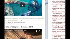 """150/2/17 09:57hs Boletín """"La Caracola""""  D.I.M. - Diario de Información del Mar Aprocean Blog http://aprocean.blogspot.com.es"""