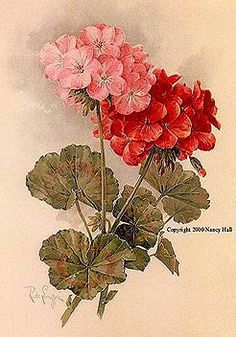 Print FREE SHIP Paul de Longpre Geranium by VictorianRosePrints, $11.99