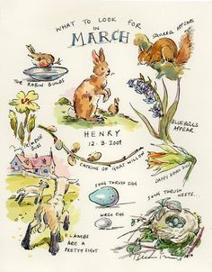 'What to Look for in March' - by Claire Fletcher Artist <> (spring, illustration, springtime) Art And Illustration, Wallpaper Free, March Month, March 6, Nature Journal, Garden Journal, Nature Study, Beltane, Months In A Year