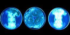 Test tube Bioluminiscence