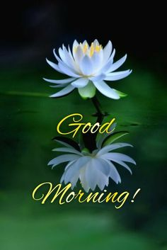 Beautiful Morning Pictures, Good Night Love Images, Good Morning Images, Good Morning Nature, Good Morning Flowers, Good Morning Wishes Friends, Good Afternoon, African Dress, Buddhism