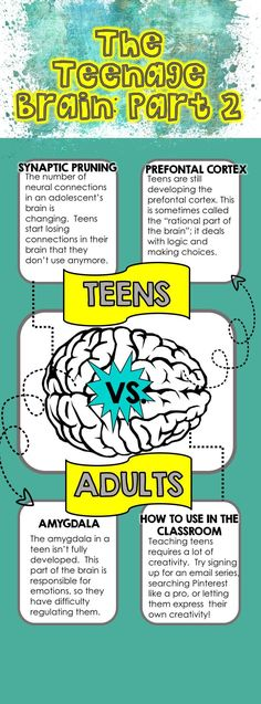 """If you raise, teach, or teach teens and are asked to describe them, the word """"emotional"""" is bound to come up. It's not only because their hormones are running wild, but because their amygdala isn't fully developed. This part of the brain is responsible for emotions, so it's no wonder teens have difficulty regulating them. Save this infographic for more key differences between teenage brains and adult brains!"""