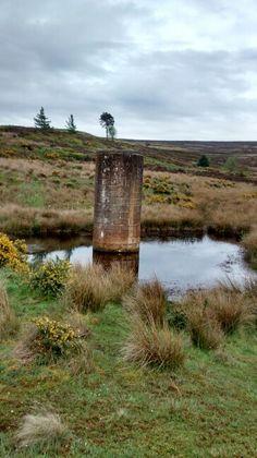Guisborough Moor