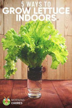 Indoor Gardening | Gardening Steps