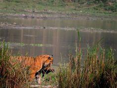 Kaziranga National Park sightings with my clients on 16th Feb 2016. contact us for wildlife tours in Assam and Northeast India. @AVantilog @artesanade @t2indiain @wildfuntravel @ptsvisa @SIT_HOLIDAYS @shaktijaya63