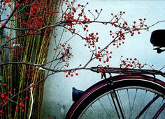 bicycle and berry.