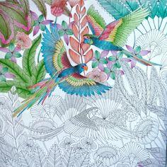Coloring Tips Books Johanna Basford Secret Garden Tropical Birds Art Corner Parrots Colored Pencils Animal Kingdom Lettering