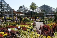 Swansons Nursery - Growing greater gardeners since 1924. retail #nursery area with trees & shrubs.
